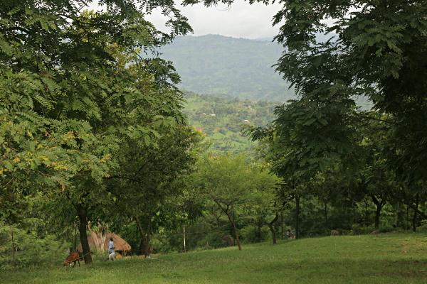 Mount Elgon from Nabugoye, near Mbale Uganda