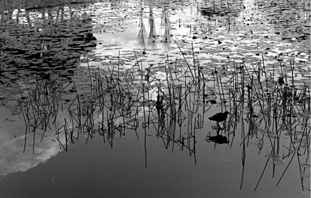 Centennial Park Pond